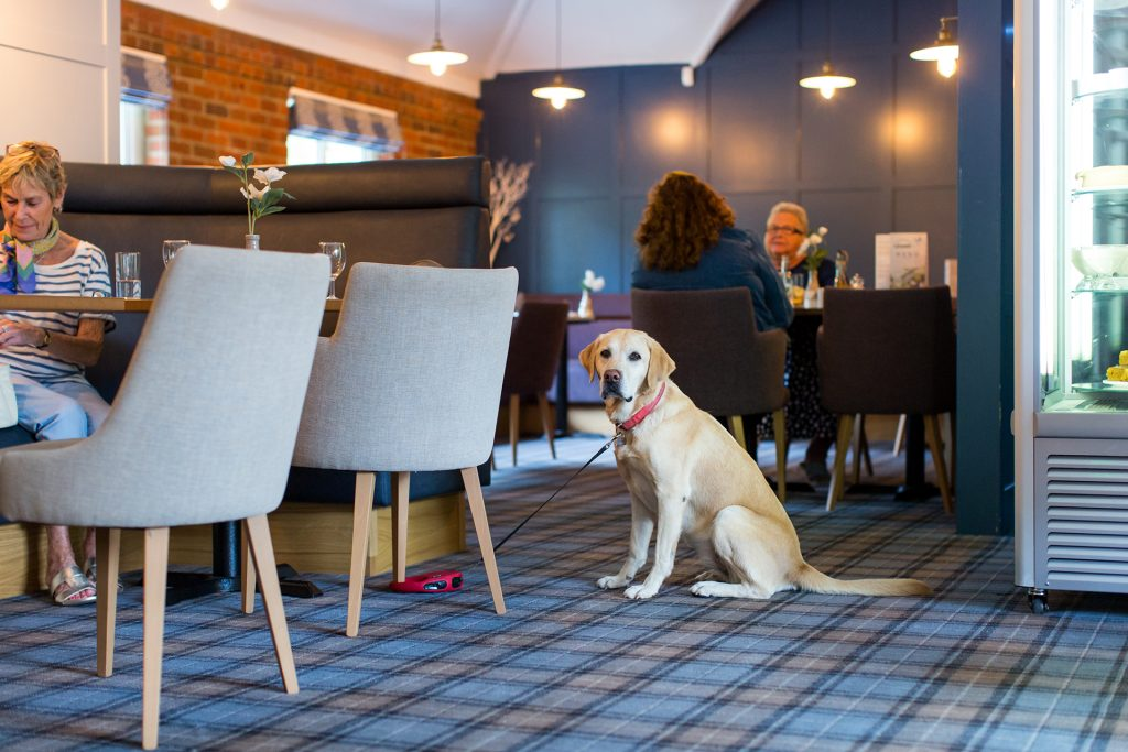 dog in the village inn at ulwell cottage caravan park in swanage