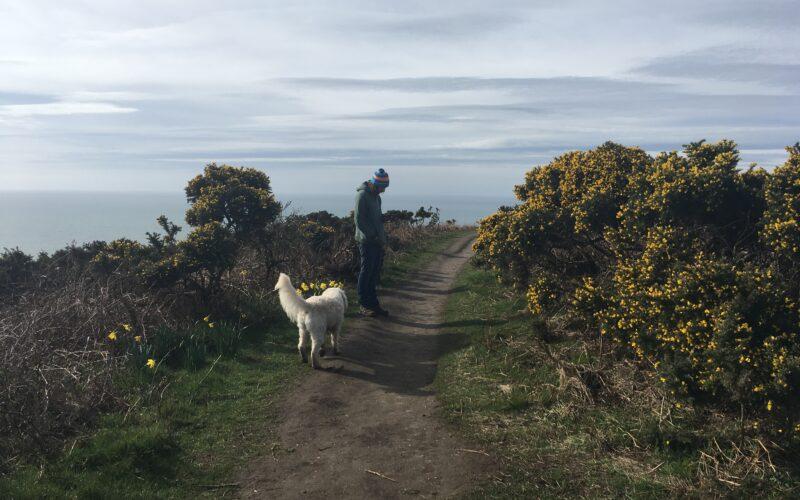 Walking at Golden Cap