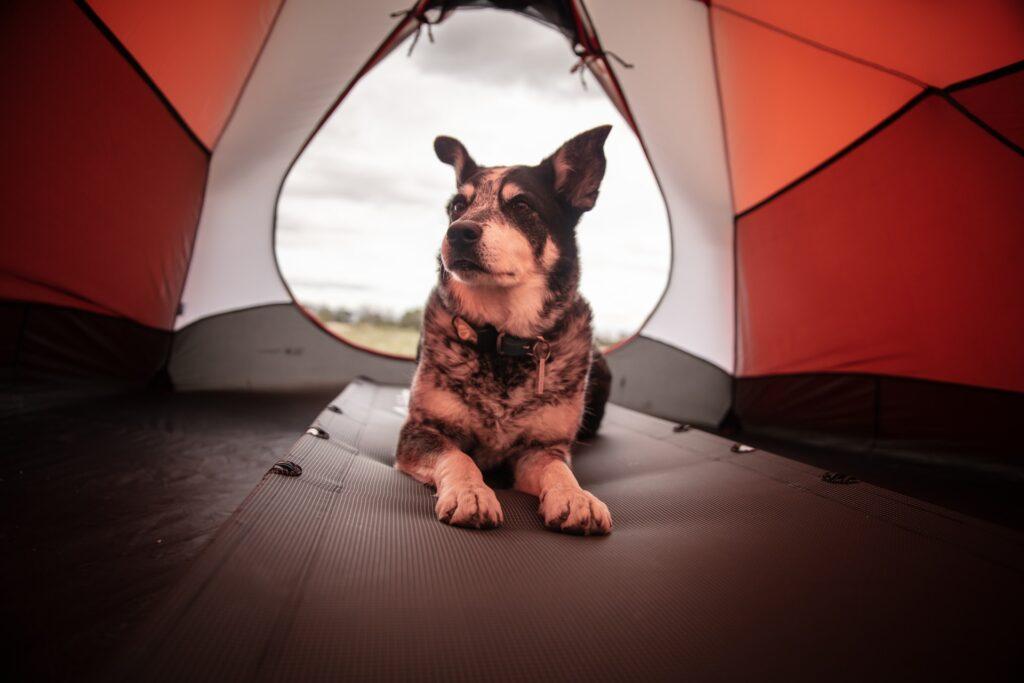 dog friendly camping