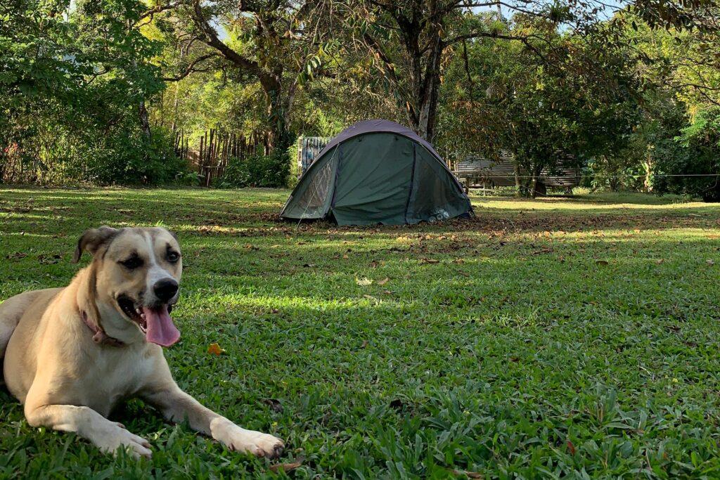 dog camping in garden