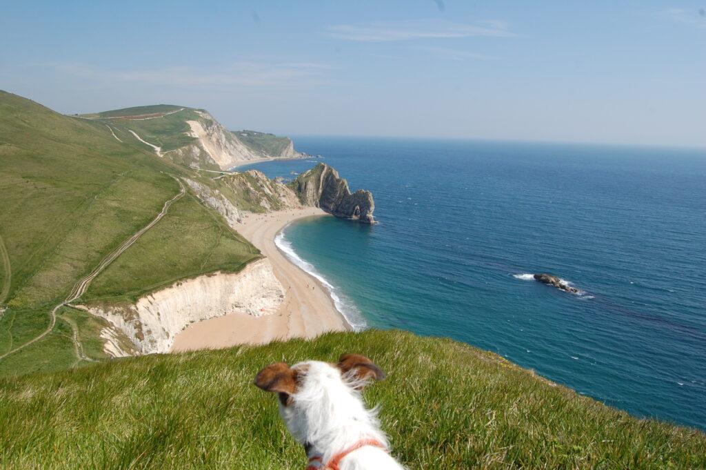 dog at durdle door beach