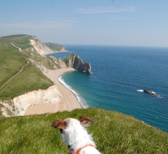 dog at durdle door beach