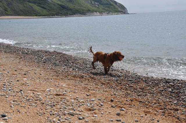 dog ringstead bay