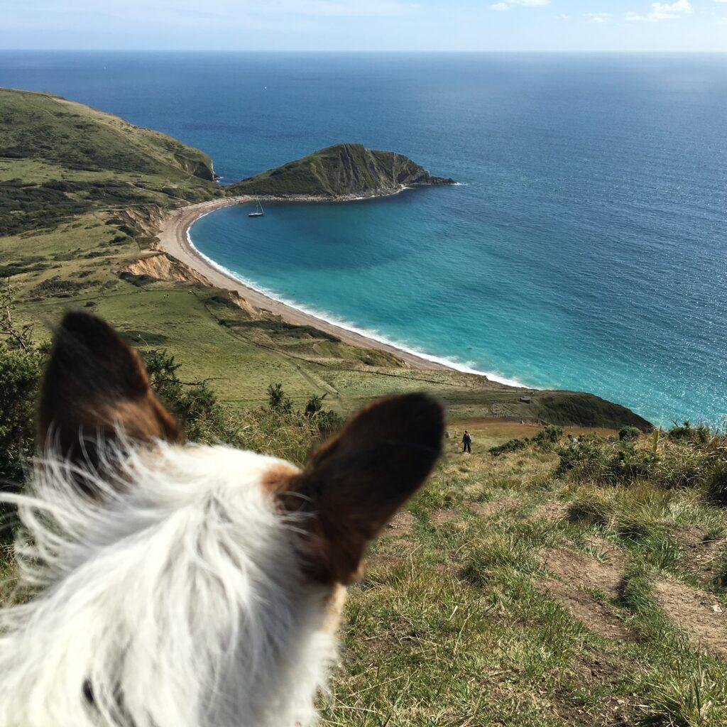 dog worbarrow bay