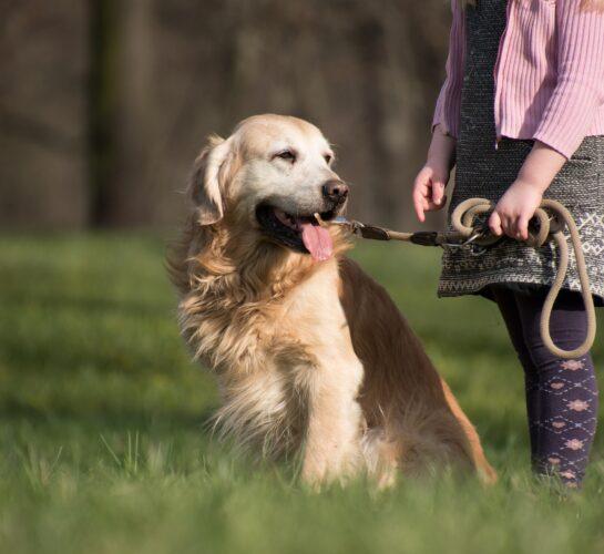 dog friendly attractions dorset